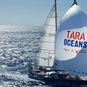 Les incroyables découvertes de l'expédition Tara oceans