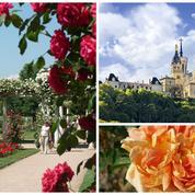 Lyon, capitale mondiale de la rose jusqu'au 1er juin