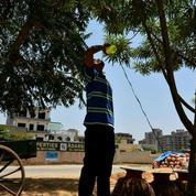 Plus de 1100 morts à cause de la canicule en Inde