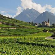 Le prix du vignoble français au plus haut