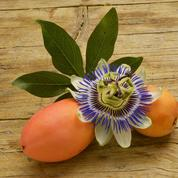 Le fruit de la passiflore est-il comestible?