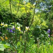 Yvelines: de grands jardiniers vous ouvrent leurs portes