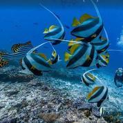 Google s'invite dans les fonds marins
