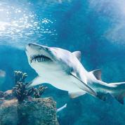 L'île de la Réunion, minée par le chômage... et les attaques de requins