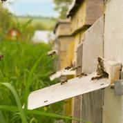 Et si on installait une ruche dans le jardin?