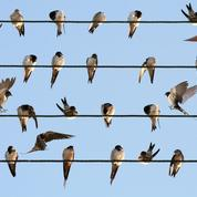 On mesurera bientôt la croissance aussi grâce… à l'abondance des oiseaux