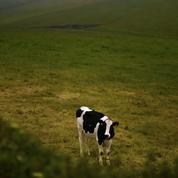 Premier cas de vache folle détecté en Irlande depuis 2013