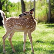 Le Domaine du Bois aux daims, au cœur de la nature pour côtoyer les animaux