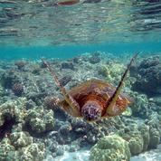L'océan, géant fragile face au réchauffement climatique