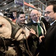 Hollande monte au créneau pour tenter de calmer les éleveurs