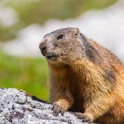 Réchauffement climatique: dans les Alpes, faune et flore doivent s'adapter