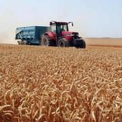 Vers une moisson historique de blé en France en2015