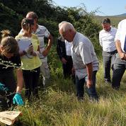 La bactérie tueuse Xylella fastidiosa inquiète la Corse