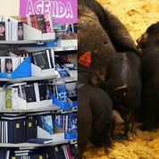 Coût de la rentrée scolaire, porc, Grèce : le récap éco du jour
