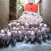 Les 3 milliards d'euros demandés par la FNSEA pour «sauver l'élevage» sont-ils la solution?