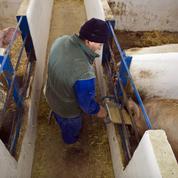 Le succès de la filière porcine espagnole