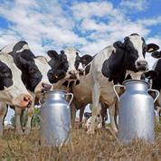 Surproduction, coût du travail: les causes du désarroi des agriculteurs