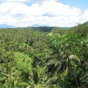 L'agriculture et l'urbanisation continuent de détruire les forêts du monde