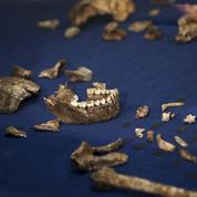 Une ancienne espèce du genre humain découverte en Afrique du Sud