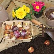 Bulbes et vivaces de printemps: confiez-les à la terre