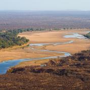 53.000 euros pour tuer un éléphant, «trésor national» du Zimbabwe
