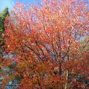 Dans le Perche, une forêt de feu s'allume chaque automne