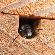 Aidez les insectes «utiles» à passer l'hiver