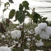 85% des tampons et serviettes hygiéniques contiendraient du glyphosate