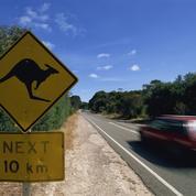Volvo teste un détecteur de kangourou pour éviter les accidents en Australie