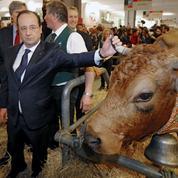 Le bœuf en Grèce échappe à la hausse de TVA grâce à… François Hollande