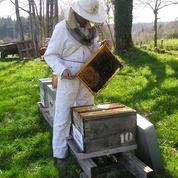 Sauvez les abeilles en parrainant une ruche