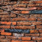 Quels arbustes planter près d'un mur sans l'abîmer ?