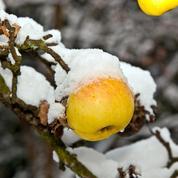 Au verger, prenez bien soin de vos arbres fruitiers