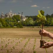 Chambord cherche des mécènes pour ses vignes