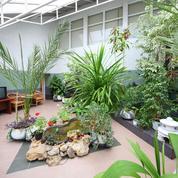Jardins intérieurs: quand la nature s'invite à la maison