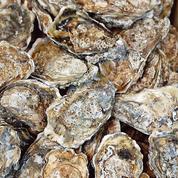 Le voleur des huîtres Gillardeau avait oublié qu'elles étaient gravées