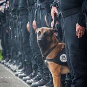 Diesel, la chienne tuée lors de l'assaut de Saint-Denis sera décorée à titre posthume