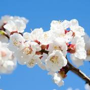 Quels arbres fruitiers planter pour favoriser la pollinisation?