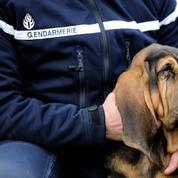 Démantèlement d'un trafic de drogue à Béziers: 12 personnes placées en garde à vue