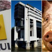 Renault, impôts, porc : le récap éco du jour