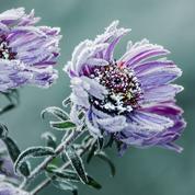 Jardin: comment protéger ses plantes du froid