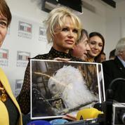 Venue défendre les oies à l'Assemblée, Pamela Anderson provoque la cohue