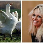 Pamela Anderson à l'Assemblée: faut pas prendre les Français pour des canards sauvages!