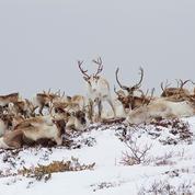 Les Saisons : l'histoire de l'Europe à travers le regard des animaux