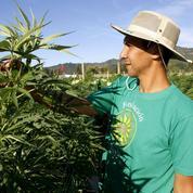 Une figure de la lutte antitabac appelle à dépénaliser le cannabis