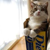 Au bureau, regarder des chatons booste notre productivité