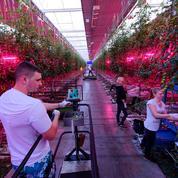 Les fermes du futur arrivent en ville