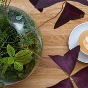 Les 5 meilleurs cappuccinos de Paris