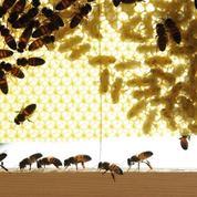 Nos filleules les abeilles ont besoin d'essaimer
