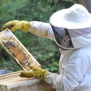 Le parfait manuel de l'apiculteur débutant